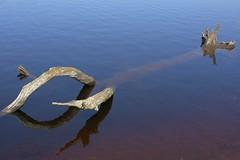 RestingPlace (Tony Tooth) Tags: nikon d7100 nikkor 35mm f18g deadtree shallowwater water lake reservoir errwoodreservoir buxton derbyshire