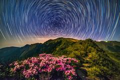 合歡山~玉山杜鵑星軌~  Taiwan Alpine Rhododendron Startrails (Shang-fu Dai) Tags: 台灣 taiwan nantou 南投 合歡山 mthehuan 星軌 彩色星軌 colorstartrails startrails nikon d800e 3417m 主峰 formosa nightscene night starry 高山杜鵑 玉山杜鵑 杜鵑 杜鵑花 taiwanalpinerhododendron happyplanet asiafavorites