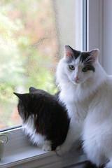Window Sharing (peterkelly) Tags: digital canon 6d northamerica canada ontario wheatley window cats cat pierroad sill sitting