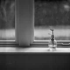 Window - Film Hasselblad (Photo Alan) Tags: vancouver canada film blackwhite blackandwhite monochrome hasselblad hasselblad503cw carl zeiss rollei