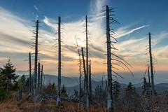 Hornisgrinde (photomakker) Tags: schwarzwald blackforest landscapephotography landschaftsfotografie hornisgrinde sunset availablelight