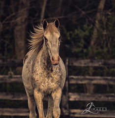 "Flowing Mane (JuanJ) Tags: lexington kentucky unitedstatesofamerica nikon d850 lightroom art bokeh nature lens light landscape happy naturephotography outside people white green red black pink skyportrait location architecture building city square squareformat instagramapp shot awesome supershot beauty cute new flickr amazing photo photograph fav favorite favs picture me explore interestingness friends dof horse dxo nikcollection equine farm bluegrass nikonfxshowcase ""nikon fx showcase"""