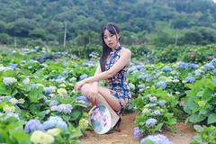 IMG_1535L (攝影玩家-明晏) Tags: 人 人像 戶外 outdoor pretty girl woman model 外拍 自然光 美女 辣妹 高家繡球花 繡球花 flower taiwan taipei 女生 女孩 素人 portrait