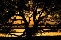 Nudgee Beach Sunrise. (womboyne7) Tags: