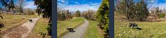 Spring is here! (lezumbalaberenjena) Tags: bully perro chien chiot dog boston terrier lezumbalaberenjena 2019 spring primavera