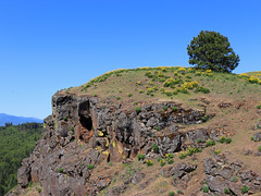 Coyote Wall Trail in WA (westernlandscapes) Tags: coyotewall trail columbiarivergorge washington pacificnorthwest hike gorge wildflowers balsamroot littlemoabtrail