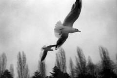 ... (maxfloriat) Tags: bird leicam6 zeiss planar 50mm