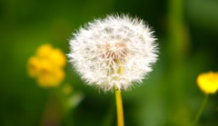 Nunhead Nature (Adam Swaine) Tags: nunhead flora flowers seeds macro naturelovers nature walks spring london britain british canon uk wildflowers naturesfinest beautiful southeast se15