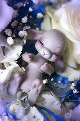 Cerulean Torpor (koalakrashdolls) Tags: bjd doll dolls rabbit bunny cocoriang tobby tobbi koalakrash koala krash kawaii cute toy custom tobi blu flower blue