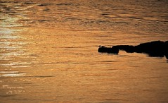 sunset reflected (EllaH52) Tags: water river ripples sunset evening afternoon reflections reef minimalism nature sun golden