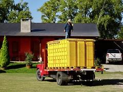 Valle de Uco Wineries - 11 (Bruno Rijsman) Tags: bruno tecla backpacking argentina valledeuco wine wineries winery mendoza