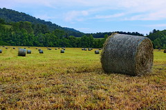 Sandy Mush Hay Bales (Rusty4344) Tags: hay haybales sky trees green outdoors outdoor