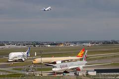 Beluga XL // A350 // A320 (Luc_slf) Tags: a320 belugaxl beluga a350 a350900 qatar indigo airbus aéronautique aeronautics aeroport aeroporttoulouseblagnac toulouseairport toulouse blagnac toulouseblagnac