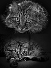 Maman & Fille (thierrybalint) Tags: maman fille chat cat famille nikon nikoniste balint thierrybalint d7200 cccg