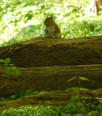 Squirrel (Thundercheese) Tags: squirrel rockcreekpark washington dc