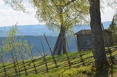 A spring day (RdeUppsala) Tags: hills shed fence cerca dalarna dalecarlia sverige suecia sweden spring paisaje primavera plantas abedul árboles cobertizo landscape landskap ricardofeinstein siljansnäs neblina haze dis björk scenery vår colinas