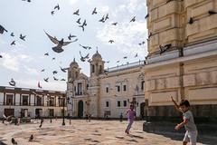 Santo Domingo Pigeons (Chicago_Tim) Tags: lima peru basilica convent santo domingo pigeons
