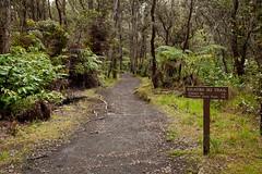 Kilauea Iki Trail, Hawaii Volcanoes National Park, Hawaii (Roger Gerbig) Tags: kilaueaiki hawaiivolcanoesnationalpark kilauea volcano hawaii bigisland island rogergerbig canoneos5dmarkii canonef24105mmf4lisusm 3004 kilaueaikitrail