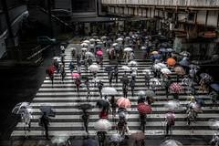 Rainy Pedestrian Crossing (SI Kamerameha) Tags: rain people street crosswalk urban umbrella station happyplanet asiafavorites