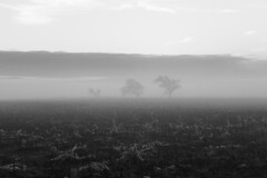 Apocalyptic (MaxMcKinney) Tags: trees wasteland foggy nature white landscape black fog dystopian end world clouds