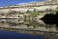 Reflection in the Yampa (Jeff Mitton) Tags: reflection yampariver dinosaurnationalmonument utah coloradoplateau canyon sandstone canyonwall landscape scenic pinyonjuniperwoodland earthnaturelife wondersofnature