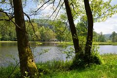 L'étang du Fleckenstein (Croc'odile67) Tags: nikon d3300 sigma contemporary 18200dcoshsmc étang eaux vosgesdunord arbres trees paysage landscape