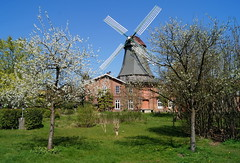 Frühling bei der Mühle Rönn (Maritime Fotografie) Tags: mühle rönn osterholz scharmbeck osterholzscharmbeck windmühle niedersachsen spring frühling heimat mare martin tolle baum apfel blüte gras gräser