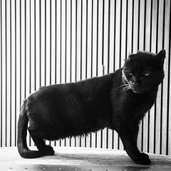 beauty is in the eyes of the beholder (Bim Bom) Tags: cat chat gato gatto blackcat joséroberto katze schwartzekatze