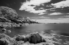 Galloupes point IR (ewan.osullivan) Tags: bw ir beach cloud infrared tripod r72 blackandwhite monochrome swampscott galloupespoint seaweed
