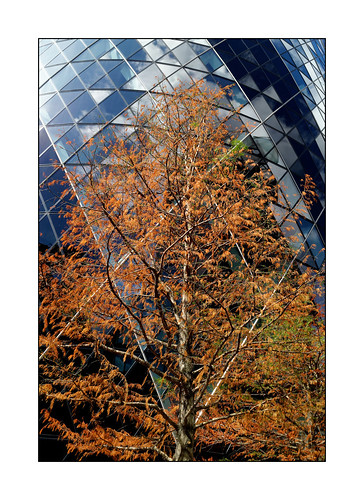 Tree on glass