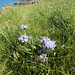 Clifftop flowers 2