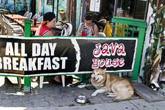 All Day Breakfast, Toronto (klauslang99) Tags: klauslang streetphotography people dog all day breakfast restaurant toronto