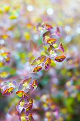 Euphorbia in the rain (judy dean) Tags: gardens flowers judydean spring velvet56 2019 plants lensbaby euphorbia purple raindrops