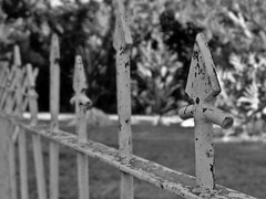 Fence (lrodigu) Tags: smileonsaturday fancyfence
