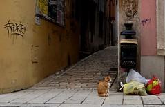 Cat (rwbthatisme) Tags: x100f fujifilm street croatia rovinj cat