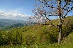Spingtime In The Mountains (mevans4272) Tags: parkway ridge blue grass trees clouds layered mountains sunny springtime