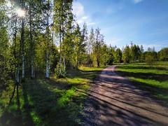 Illan pitkät varjot. (Pinelope) Tags: varjot shadows evening ilta tie road puut trees suomi finland
