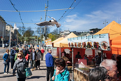 gull attack! (@Tuomo) Tags: finland gull spring may kauppatori marketplace sony a9 ilce9 sel35f28z streetphotography street urban nature helsinki