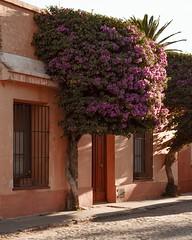 Colonia del Sacramento - Uruguay (Irene Carbonell) Tags: colonia coloniadelsacramento uruguay uruguaynatural calles lugaresconencanto