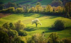 spring is beautiful ... (proffkom_) Tags: spring bukovina light tree fields sky clods green colors ukraine україна буковина пейзаж