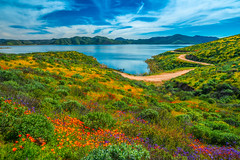 Diamond Valley Lake Wildflowers! Sony A7R III & FE 16–35 mm G Master Wide-Angle Zoom Lens! Diamond Valley Lake Wildflower Trail Wild Flower Super Bloom! California Wildflowers Superbloom Fine Art Photography! Elliot McGucken Fine Art Landscapes! (45SURF Hero's Odyssey Mythology Landscapes & Godde) Tags: epic high res multishot panormama stitched lightroom sony a7r iii fe 16–35 mm g master wideangle zoom lens diamond valley lake wildflower trail wild flower super bloom california wildflowers superbloom fine art photography elliot mcgucken landscape nature 4k 8k