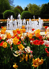 Happy Thoughts (michellewendling907) Tags: tulips botanicgarden chicago springflowers flowers happy cheerful colorful