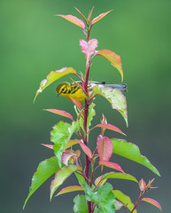 Prairie warbler (nikunj.m.patel) Tags: warbler nature wild wildlife nikon nikond850 bird migration spring birdphotography