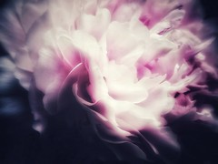Layers (LAKAN346) Tags: light macro pink floral flower nature natural delicate soft pov magical magichour peony samsung mobilephotography