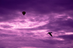 Pelican and Hot Air Balloon (lizjakimow74) Tags: air sunrise bird flying sky transportation pelican silhouette balloon clouds