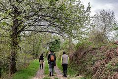 14-Sortie de forêt (Alain COSTE) Tags: 2019 forêt hautevienne lavarache limousin nikon ocb printemps randonnée eymoutiers france