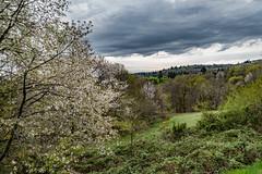 20-C'est le printemps!! (Alain COSTE) Tags: 2019 forêt hautevienne lavarache limousin nikon ocb printemps randonnée eymoutiers france