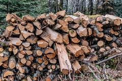26-L'hiver sera rude (Alain COSTE) Tags: 2019 forêt hautevienne lavarache limousin nikon ocb printemps randonnée eymoutiers france