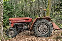 28-Massey Fergusson 65 (Alain COSTE) Tags: 2019 forêt hautevienne lavarache limousin nikon ocb printemps randonnée eymoutiers france