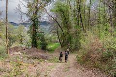 30-Descente (Alain COSTE) Tags: 2019 forêt hautevienne lavarache limousin nikon ocb printemps randonnée eymoutiers france